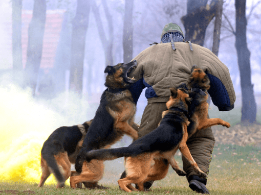 Dog Attack.png